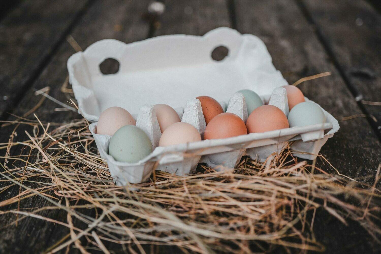 10er-Paket Eier