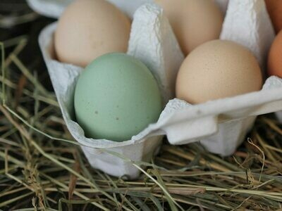6er-Paket Eier