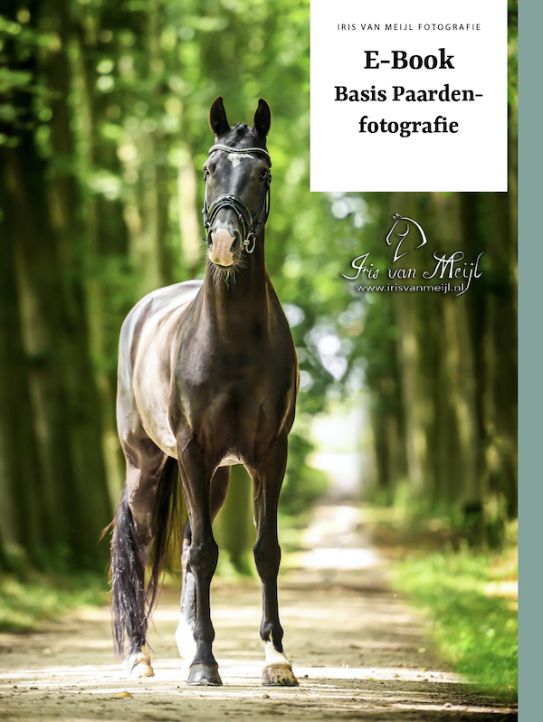 E-book: Paardenfotografie voor Beginners