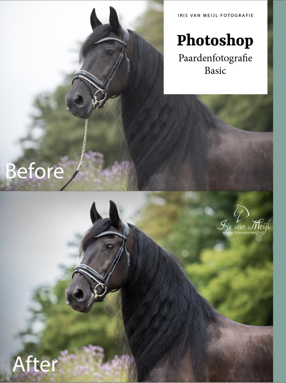 Photoshop Paardenfotografie Basic