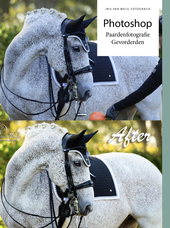 Photoshop Paardenfotografie Gevorderden