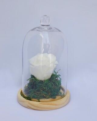 forever white rose