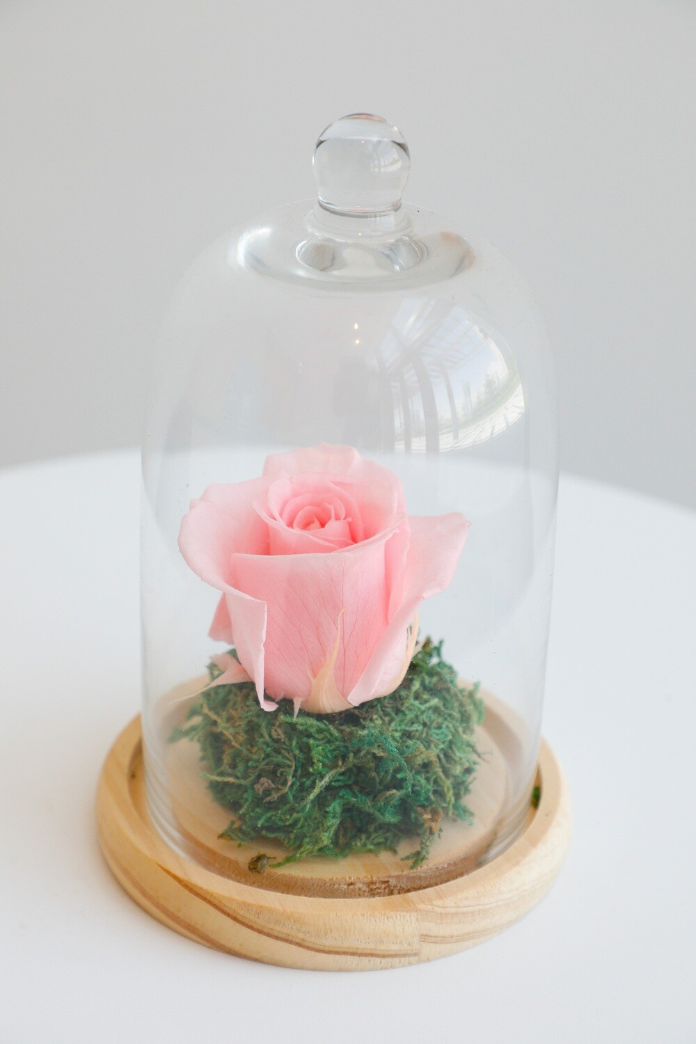 Infinity Rose Light Pink