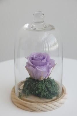 Infinity Rose Light Purple