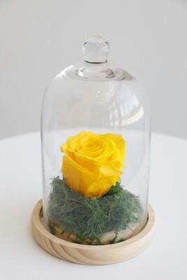 Infinity Rose Yellow