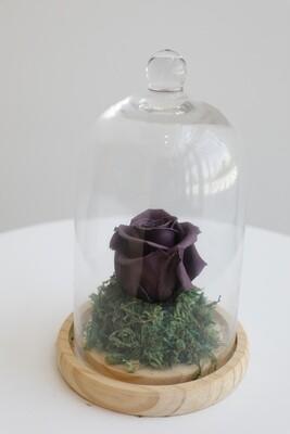 Infinity Rose Purple