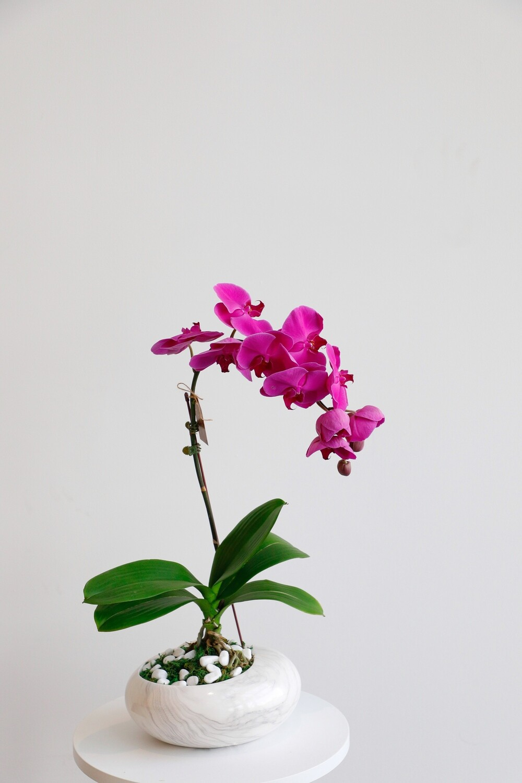 Phalaenopsis Purple With Marble Vase