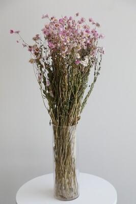 Dry pink Flowers