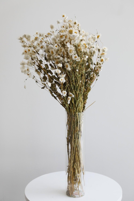 White Dry Flowers