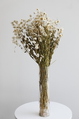 White Dry Flowers