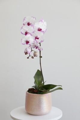 Phalaenopsis With Pink Vase