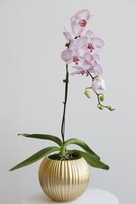Phalanopsis With Gold Vase