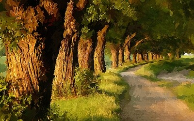 Аллея старых деревьев