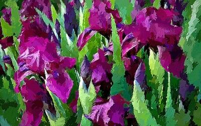Ирисы фиолетовые