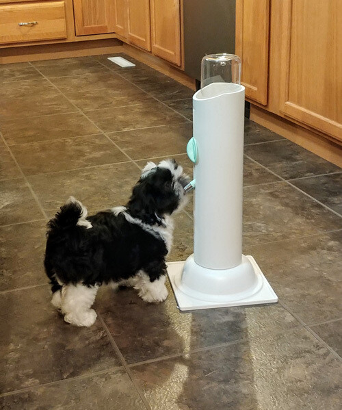 Thirsty Pet Water Bottle Stand
