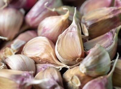 Wholesale Seed Garlic