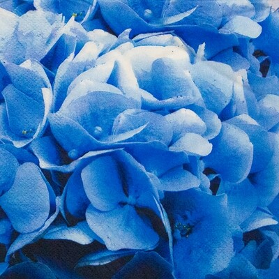 Floral Blue Paper Napkin 13x13 - (Pack of 20)