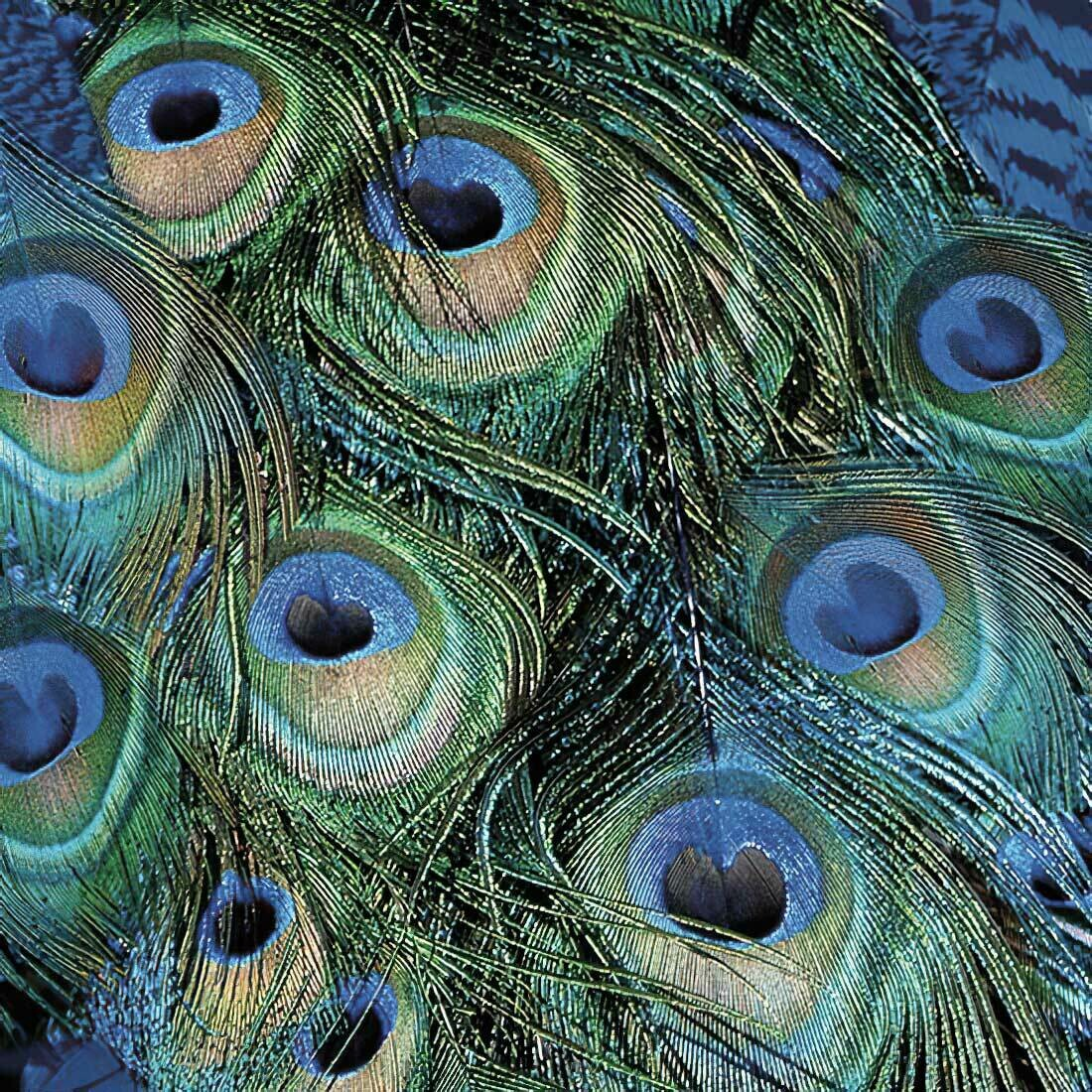 Decoupage Paper Napkins - Bird - Peacock-Feathers (1 Sheet)