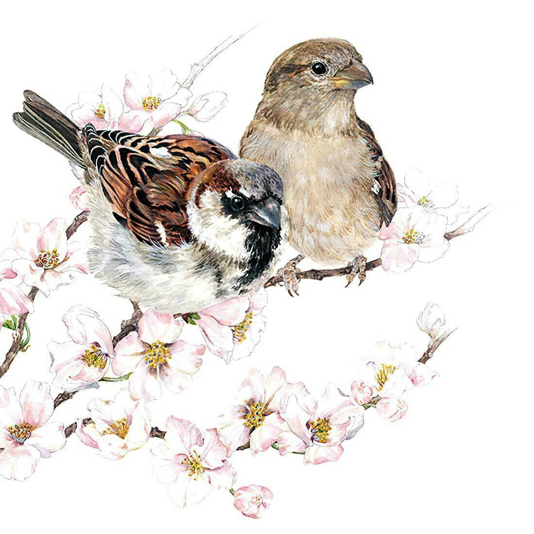 Decoupage Paper Napkins - Bird - Sparrows Blossom (1 Sheet)