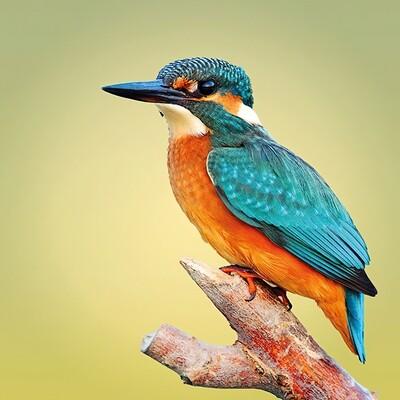 Decoupage Paper Napkins - Bird - Kingfisher (1 Sheet)