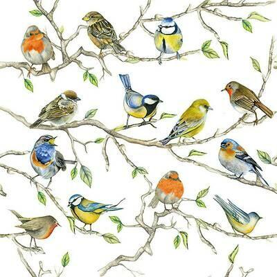 Decoupage Paper Napkins - Bird - Birds Meeting (1 Sheet)