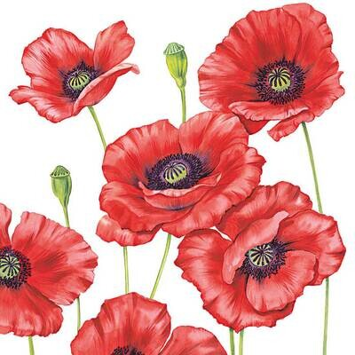 Decoupage Paper Napkins - Floral - Romantic Poppy 13x13 (1 Sheet)