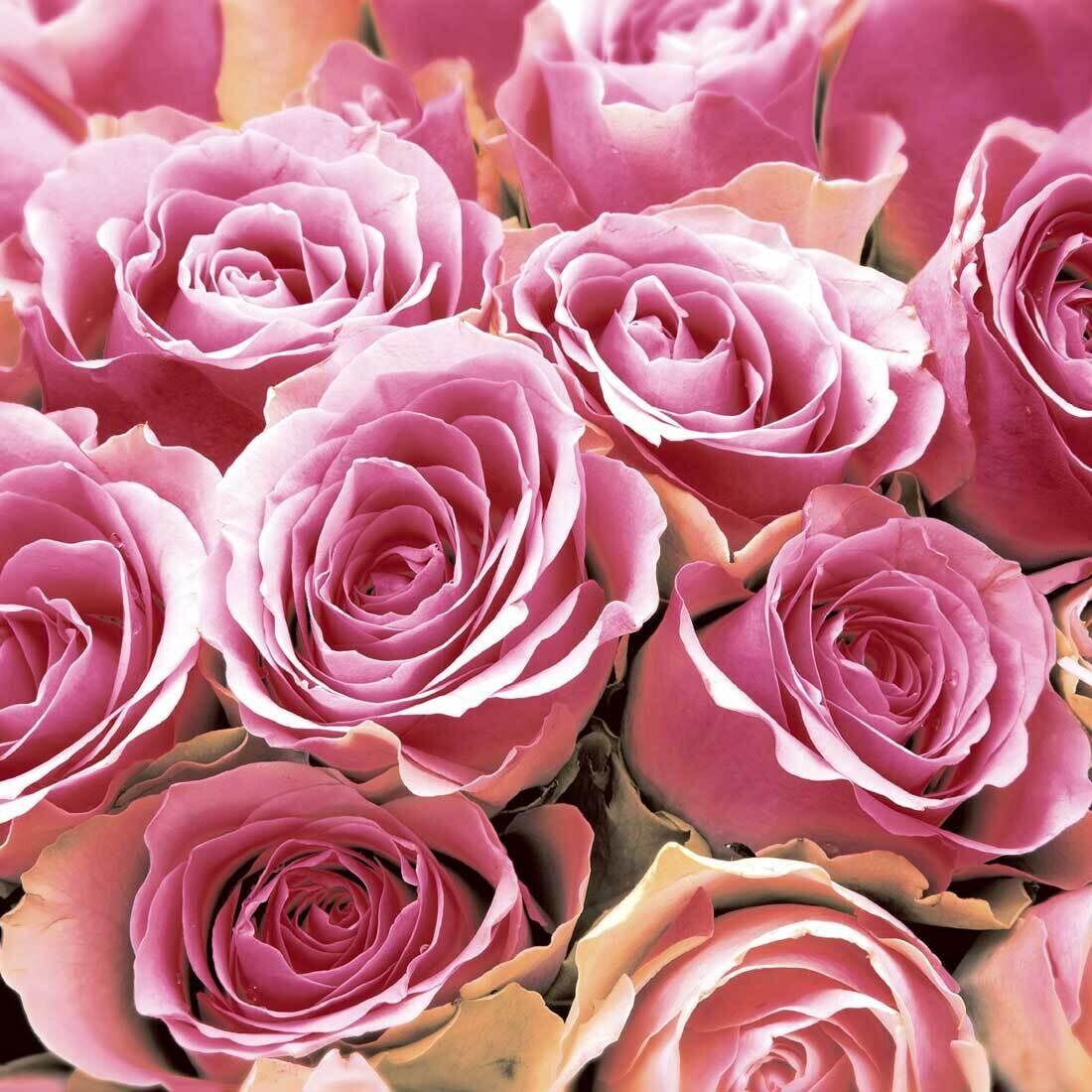 Decoupage Paper Napkins - Floral - Pink Roses (1 Sheet)