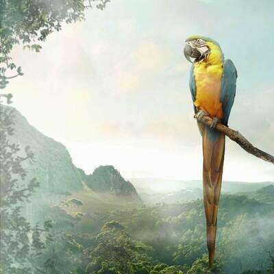Decoupage Paper Napkins - Bird - Parrot (1 Sheet)