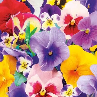 Decoupage Paper Napkins - Floral - Violas (1 Sheet)