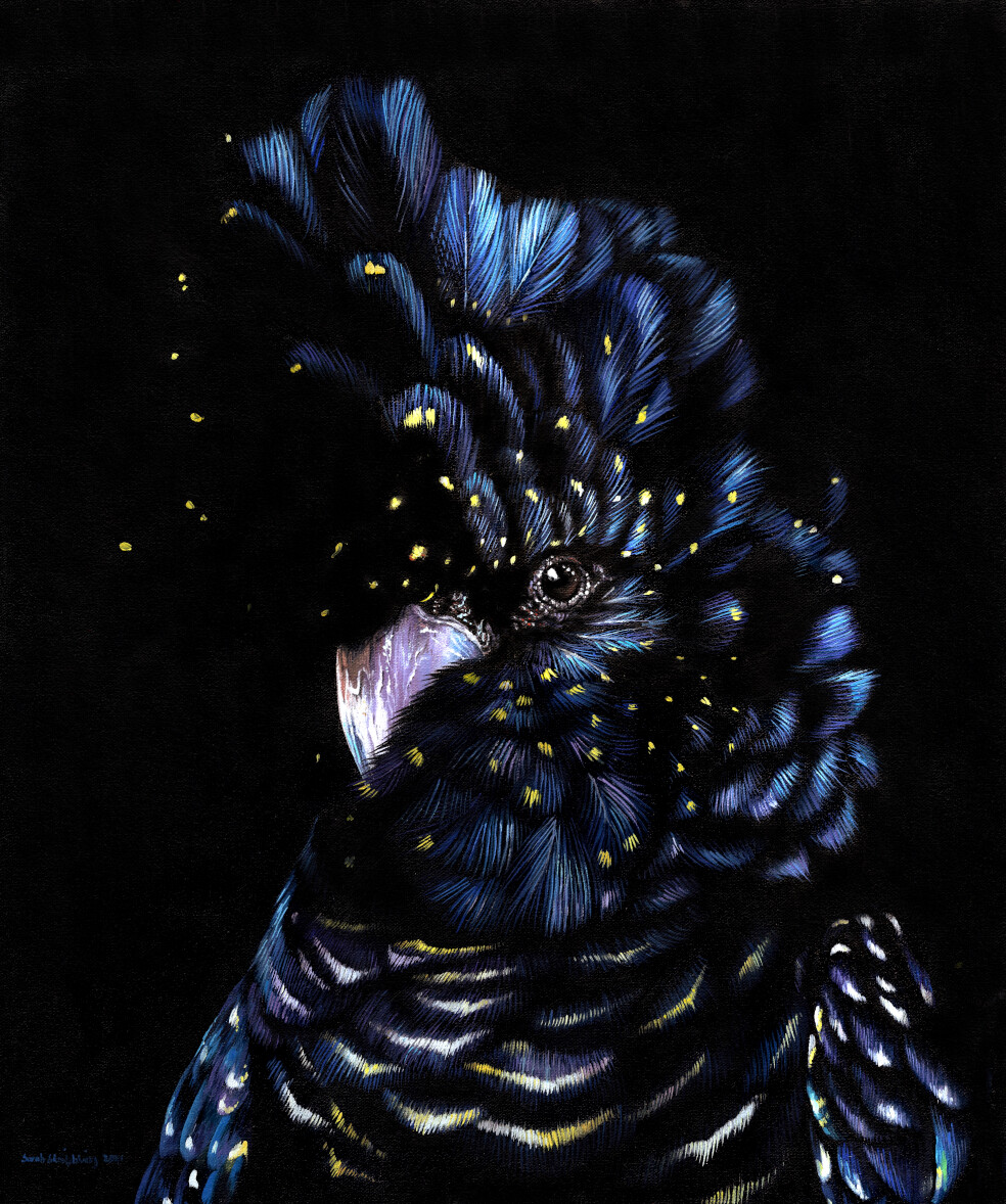 Red Tailed Black Cockatoo Oil painting