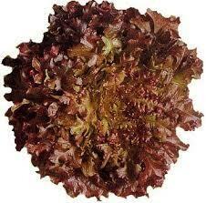 LECHUGA RED SALAD 100% orgánica certificada Monte Fértil x unidad 200 gr. aprox.