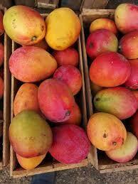 Cajón de mango 13 kilos aproximadamente