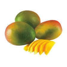 Mango kent x kilo