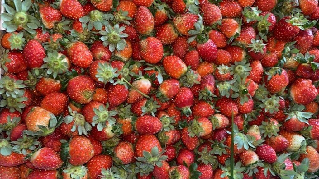 Fresas x cajón  pequeñas granel aprox 6 kilos