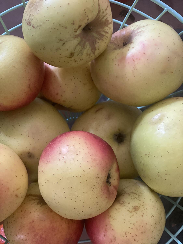 Manzana winters grande x kilo