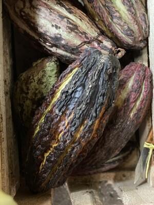 Cacao x unidad