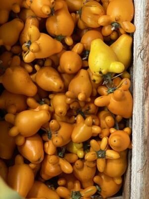 Teta de vaca x kilo fruto medicinal