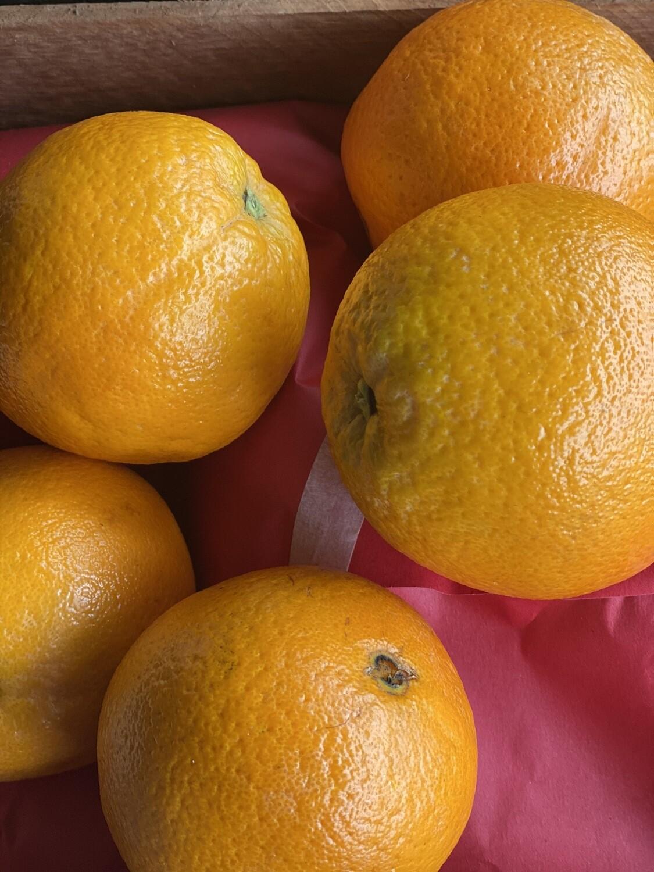 Naranja de mesa grande extra