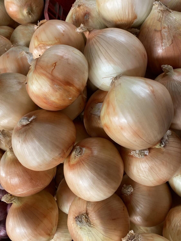 Cebolla blanca colosal extra x kilo