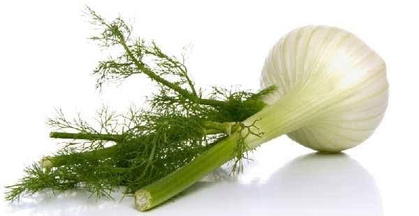 Hinojo hojas y bulba x atado (1 unidad de Bulba con hojas )