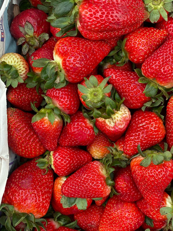 Fresas hidroponicas grandes x kilo