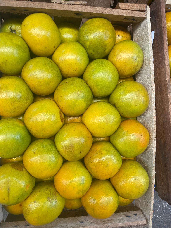 Naranja Morochitas X Cajon de  aprox. 19 kilos