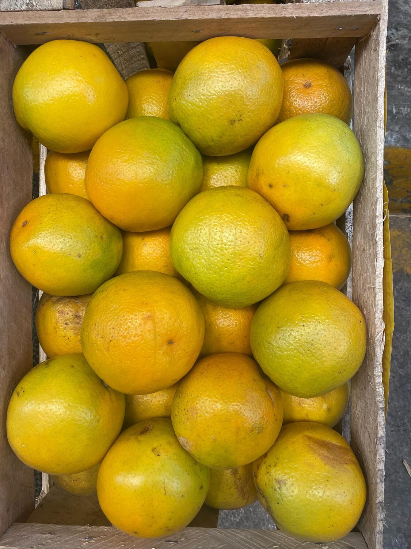Naranja valencia X cajon  aprox. 19  kilos  extra
