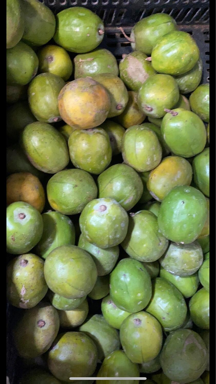 taperiba mango ciruelo verde x kilo
