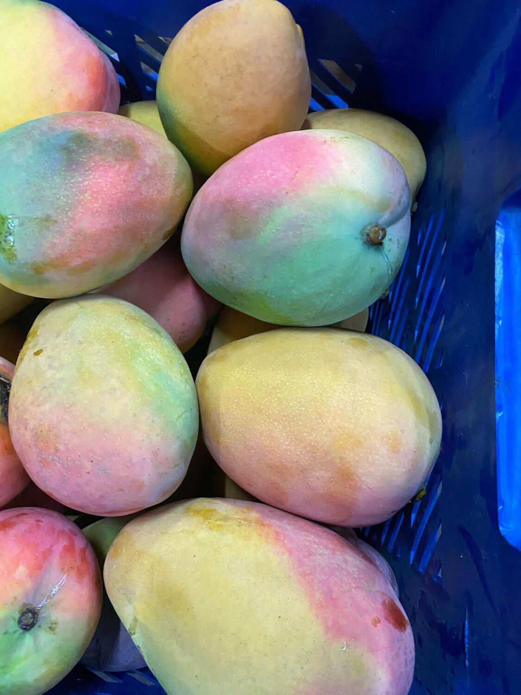 Mango edwar exportación x kilo
