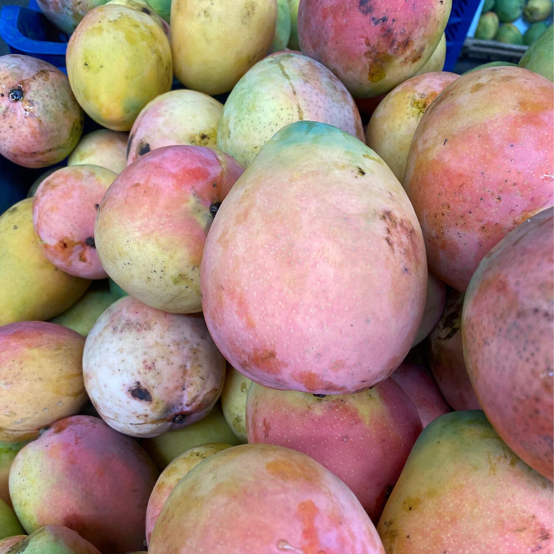 Mango Edward planta extra x kilo