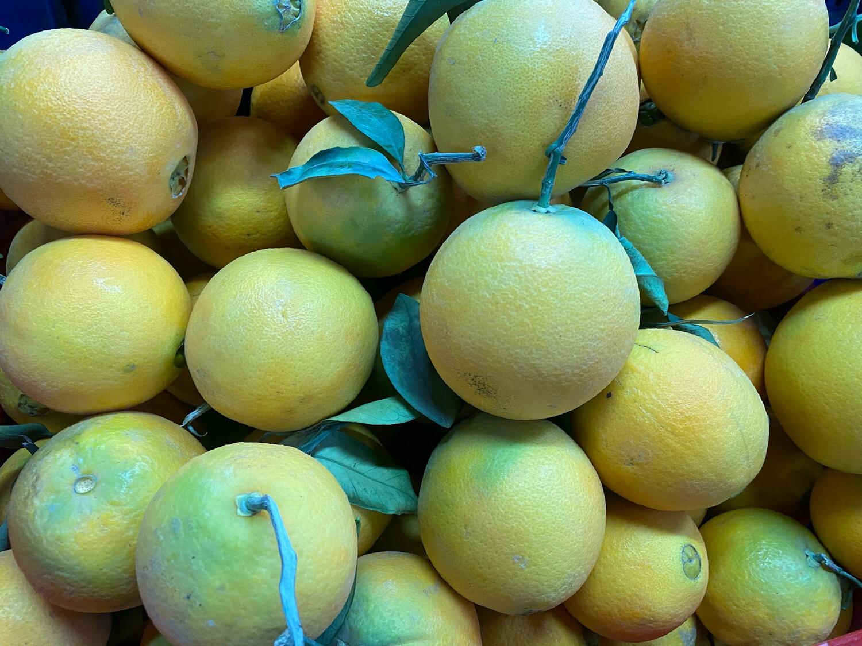 Naranja huando Exportacion x kilo