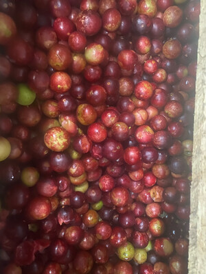 Camu camu rojo x kilo maduro