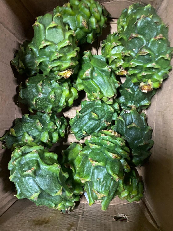 Pitahaya verde x kilo ( madurara en 5 día )