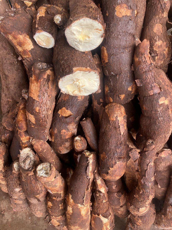 Yuca serranita x kilo extra